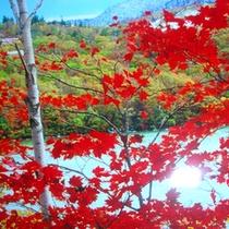 *志賀高原の紅葉
