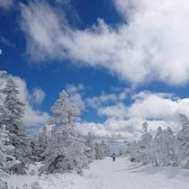 *横手山の樹氷(スノーモンスター)/横手山山頂に広がる樹氷は圧巻!SNS映えもする大迫力の樹氷群です