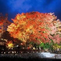 河口湖紅葉回廊 例年の紅葉の見ごろ:11月中旬