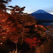 山中湖の紅葉 例年の紅葉の見ごろ:11月上旬