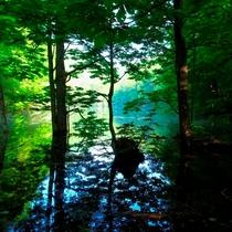 【朝陽の森の湖沼めぐり】(春)