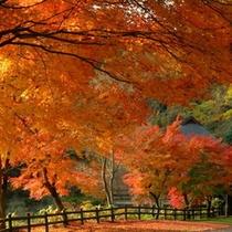 【秋】ミューズパーク梅園付近の紅葉
