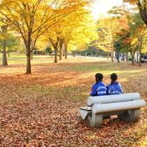 【秋】秩父ミューズパークの秋の景色、落葉の絨毯も異空間に誘います。