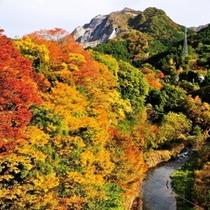 【秋】浦山川の紅葉