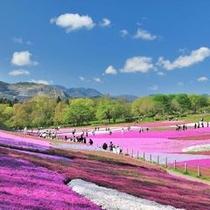 【春】「羊山公園」の芝桜 17,600平方メートルの敷地に40万株の芝桜が咲き誇ります