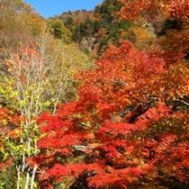 【秋】中津川渓谷のもみじ
