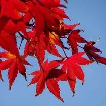 【秋】紅葉スポットは宿からアクセスし易い場所に点在し紅葉の鑑賞が楽しめます!