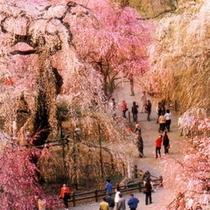 【春】清雲寺全景