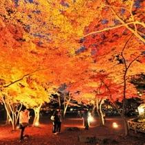 【秋】長瀞月の石もみじ公園の紅葉