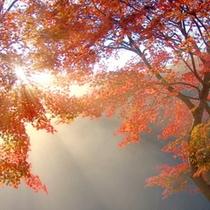 【秋】幻想的な朝日と紅葉のコラボレーションを是非当館で堪能下さい。