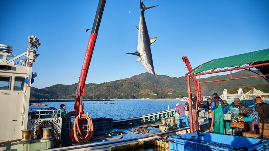 【北浦古江漁港】時にばフカがかかる事も。クレーンを使って下ろします。