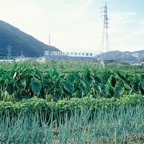 ふるさと農園