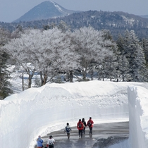 *八甲田ウォーク/10メートル近い雪壁の回廊をウォーキングしませんか♪?