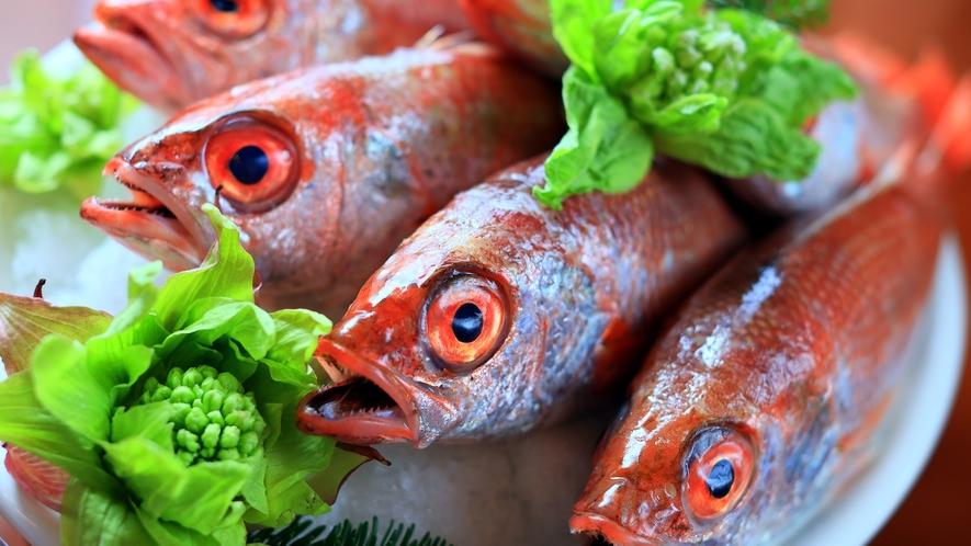 【旬の食材】青森県西海岸産 のどぐろ