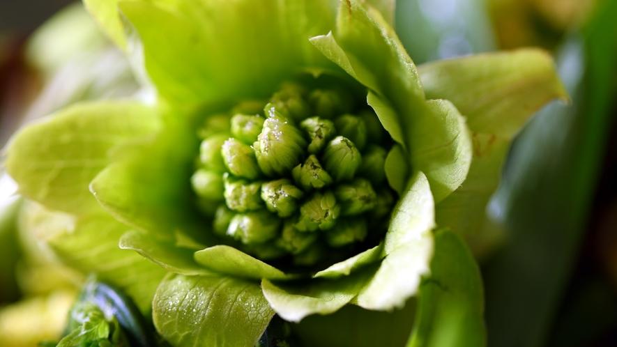 【旬の食材】春の芽生え