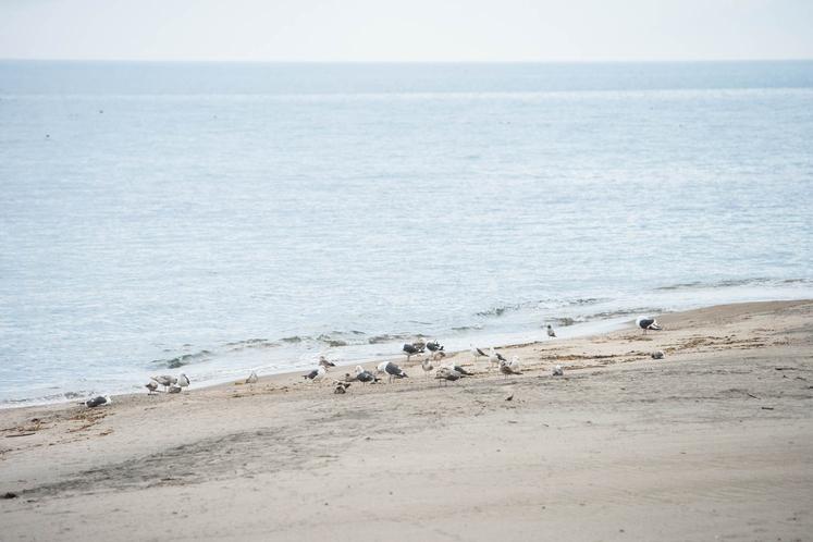 ホテルからすぐの浜辺にはカモメがたくさんいます