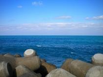 テトラポットの外側は外洋と繋がるので海水の色も違います