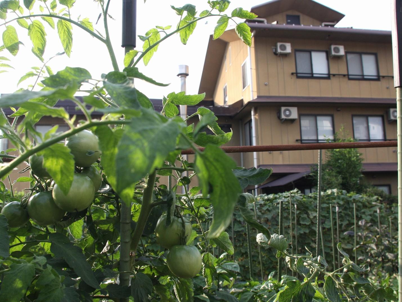 宿の裏庭弐も畑があります。