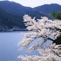 音水湖<桜>