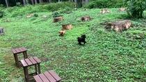 *ワンちゃんたちが遊べるちょっとした庭があります★