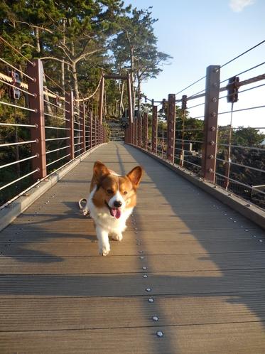 吊り橋まで朝のお散歩