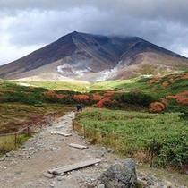 【旭岳(秋)】旭岳ロープウェイ姿見駅周辺の様子。9月上~中旬には見頃を迎えます。