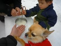 ワンコと一緒にアイスクリーム