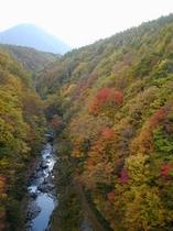 紅葉の中津川