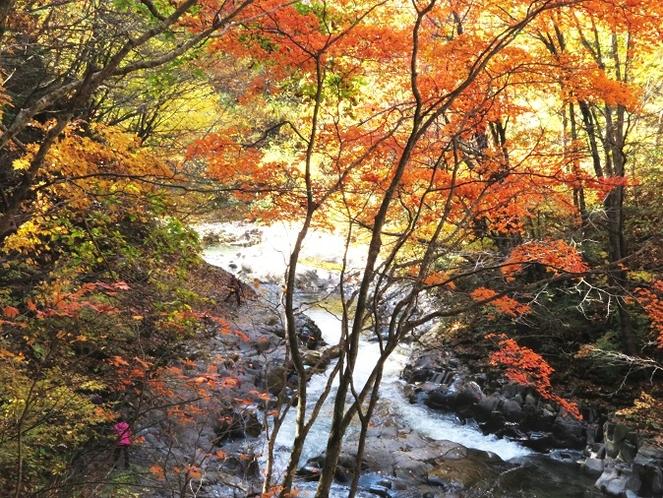 中津川渓谷の紅葉①