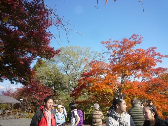五色沼の紅葉②