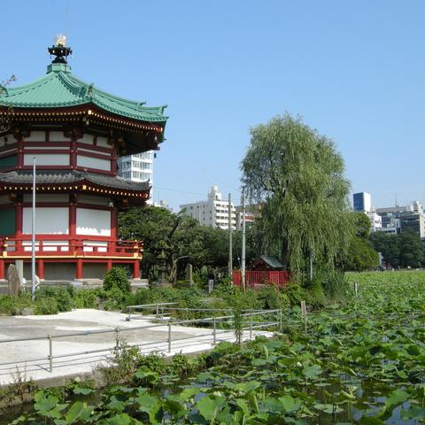 ホテル周辺観光(1) 弁天堂と不忍池(蓮池)
