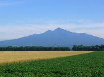 夏の斜里岳 麦とジャガイモ畑