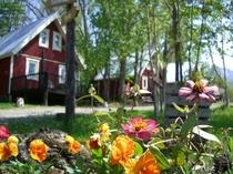 花壇の花とコテージ