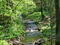 敷地内に流れる渓流は心が落ち着きます。