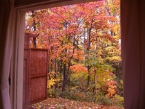 B棟リビングから眺める美しい秋の彩り