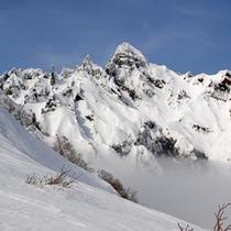 *南陵の万年雪