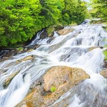 **【竜頭の滝】滝壺近くが大きな岩によって二分され、その様子が竜の頭に似ていることが名前の由来です。