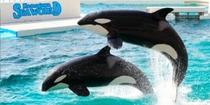 鴨川シーワールド◆シャチやベルーガをはじめ、11,000点を超える海の生き物が展示されております。