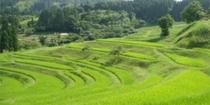 大山千枚田◆千葉県指定名勝にも選ばれております。夏には青々とした稲が美しく風に揺れます。