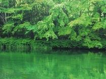 夏の雲場池