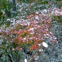 *天候次第では紅葉と雪という珍しい光景が見れるかも!