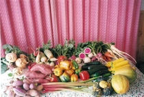 10月の収穫物
