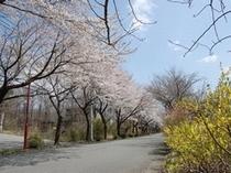 春の並木道