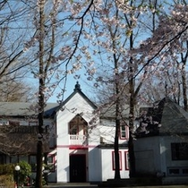 桜とダイアナ