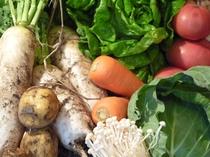 自然のうまみたっぷりの朝どれ野菜