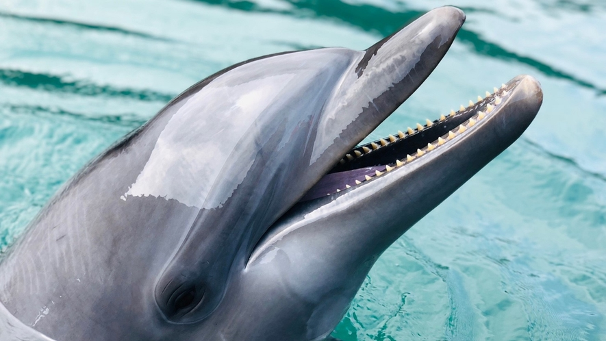 *■壱岐イルカパーク■イルカのショーや、ふれあい体験など、かわいいイルカ達と遊べる公園
