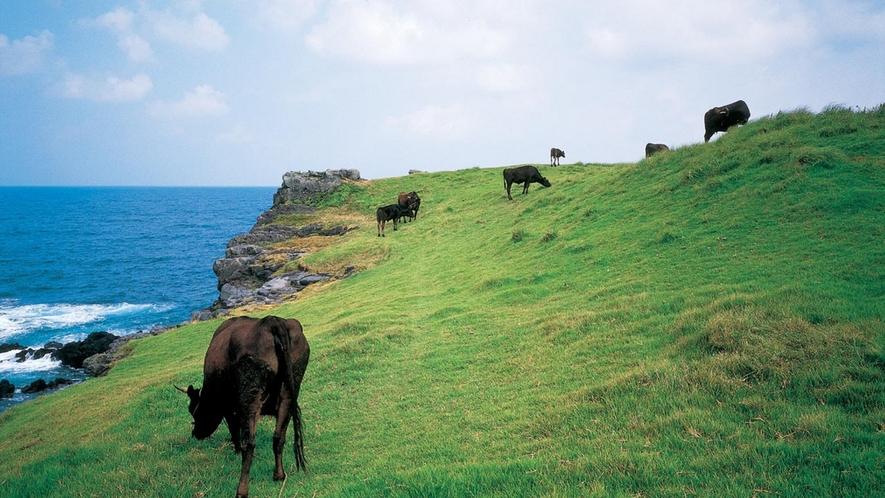 *■左京鼻■海岸線には、玄武岩の柱状節理が発達して出来た大岩が点在しており、『壱岐対馬国定公園』に指