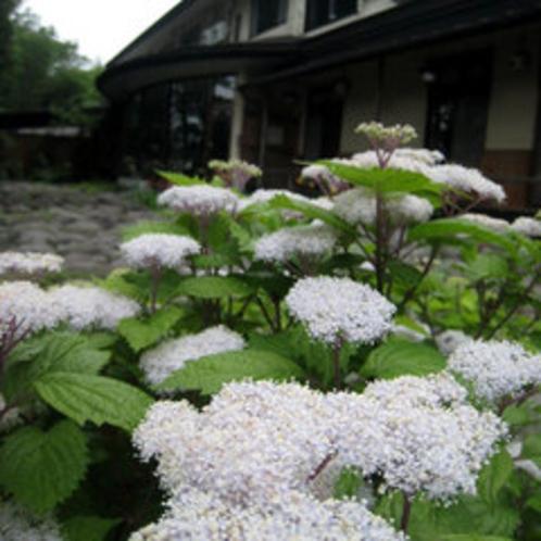 *季節の花がお出迎え