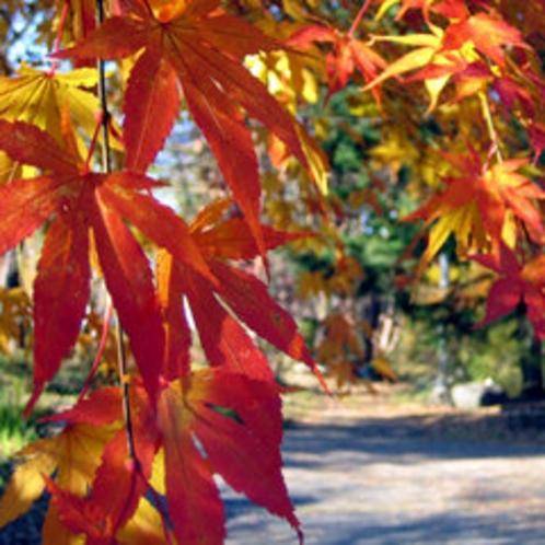 *秋は紅葉が楽しめます