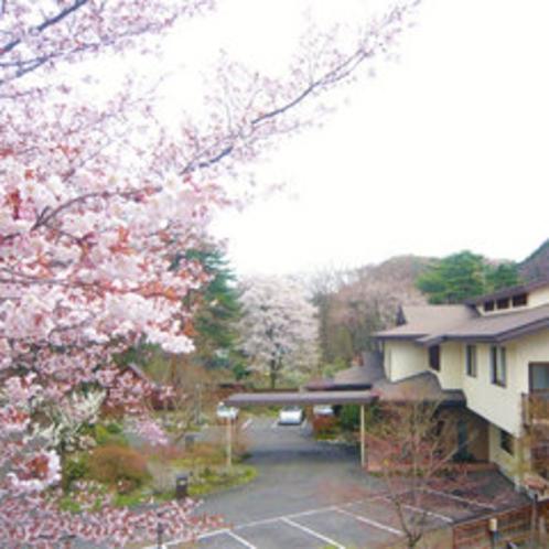 *旅館前、春の風景。